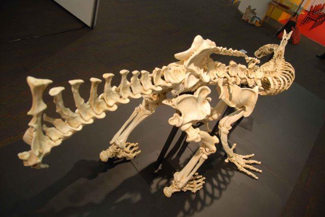 Humanosaur (54)