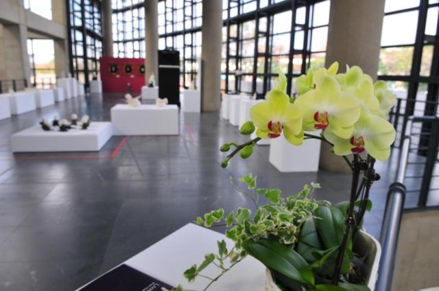 朋友突然送來清新美麗的蘭花,為展廳増添優雅氣紛,感動!